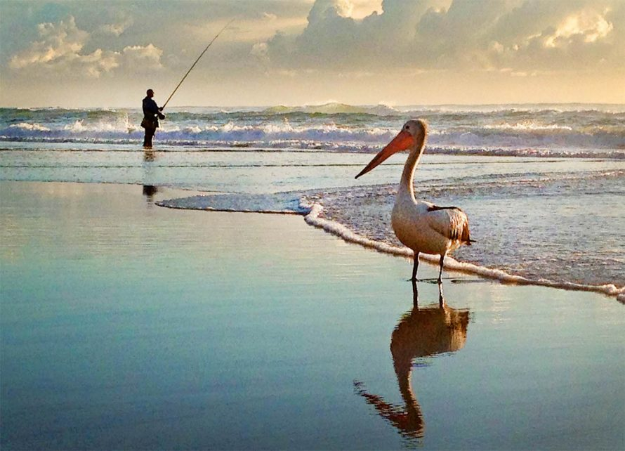 pelican on beach with fisherman in the background